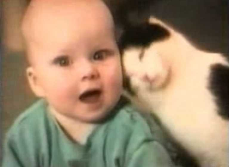 Funny Cat Montage Video
