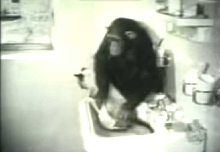 Monkey Washes A Cat In This Classic Video Footage