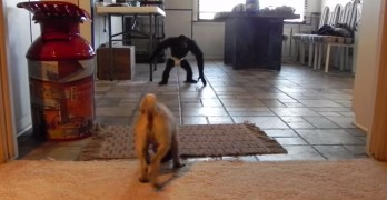 Dog Versus Monkey In This Legendary Fight