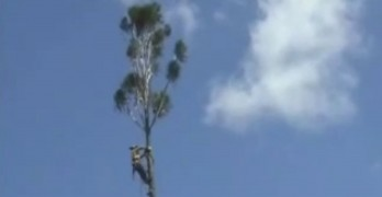 Tree Cutting Goes Wrong As He Nearly Loses It