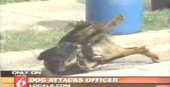 Dog Gets Tasered After It Attacks Police Officer