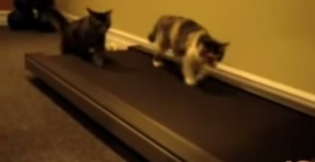10 Cutest Cat Moments In One Funny Video