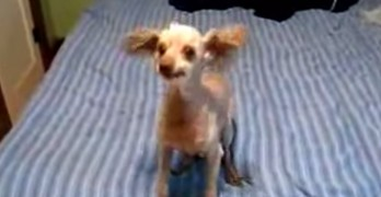 Dog Freaking Out Like Seen In Bruce Almighty