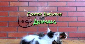 The Best Funny Animal Video Ever Possibly Created