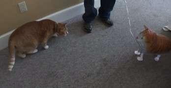 Cat Versus Cat Balloon In Ultimate Showdown