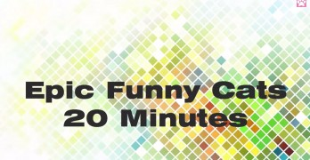 Epic Funny Cats And 20 Minutes Of Fun