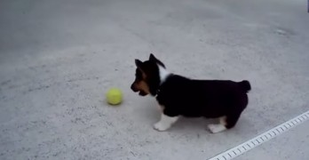 World's Most Funny Dogs 2013 Video