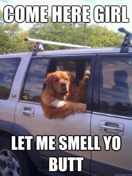 Dog Smelling Butt Meme