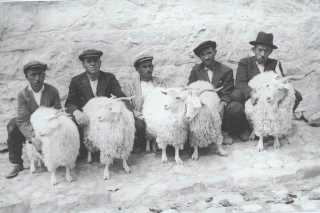 Are These Sheep For Sale?