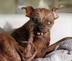 Ugliest Cat In The World