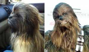 Chewbacca Dog and Chewie