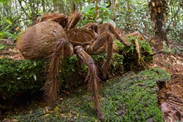 Dog Sized Spider