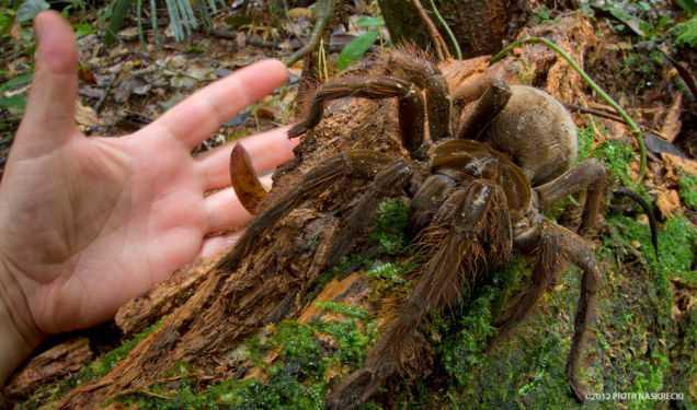 Puppy Sized Spider