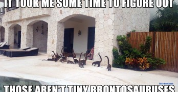 Tiny Brontosauruses Seem To Be Taking Over This House